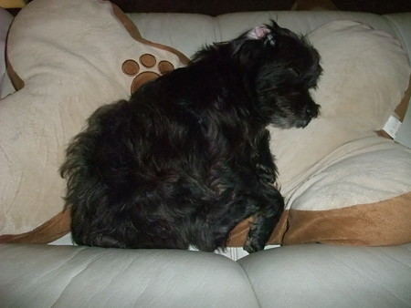 ソファーで眠る風太