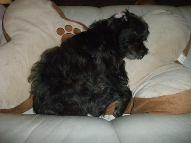 Photos: ソファーで眠る風太