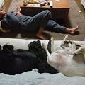Photos: 4人(人1人+犬3頭)一緒に