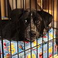 Photos: 子犬のジャス