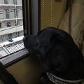 Photos: また雪やん!!