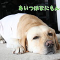 Photos: なにもん?!