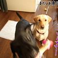 Photos: ぎゃあ