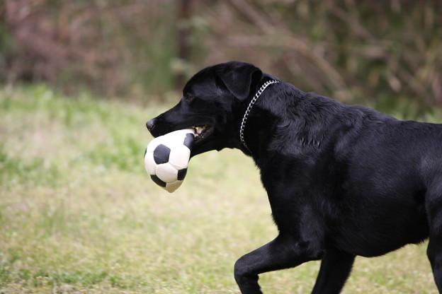 Photos: ボール遊び