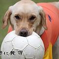 Photos: 死守