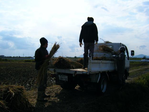 Photos: ハサがけ'09 (15)