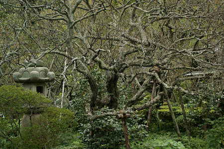 古木の枝ぶり1026h
