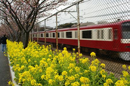 桜祭りの中、通り過ぎる電車!(110219)