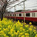 Photos: 桜祭りの中、通り過ぎる電車!(110219)