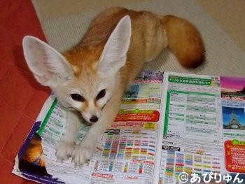 お邪魔狐2