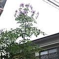 写真: 竹の花をみつけた。 120...
