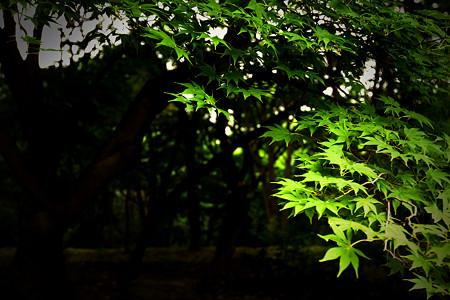 昌慶宮庭園
