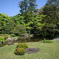 Photos: 縁側から見た庭