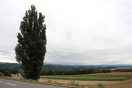 美瑛の丘~ケンとメリーの木