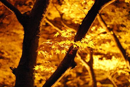 香嵐渓の黄色