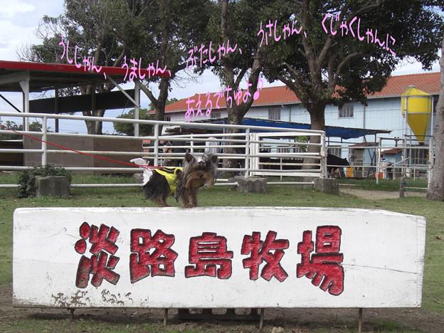 Photos: 淡路島牧場