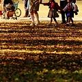 枯れ葉の遠足