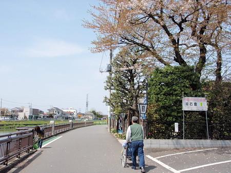 桜は終わった