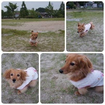 20120618 お散歩