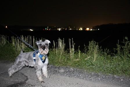 夜のいつもの散歩道