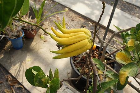 小さなバナナ