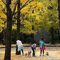 近隣の秋・・1