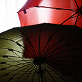 Photos: 雨の翌日
