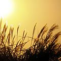 傾いた太陽が眩い時間