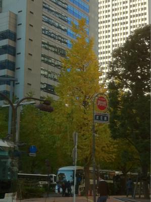 西新宿も色づき始めた