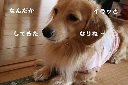 ぶちぎれラーメン 8