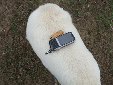 背中に携帯電話が乗るってのも…(^^ゞ