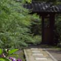 写真: 海蔵寺 04