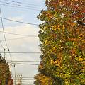 写真: ご近所の秋 01