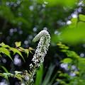写真: 山に咲く花1